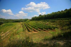Szekszárdi szőlőhegyi romantika és wellness